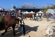 Echter Viehmarkt