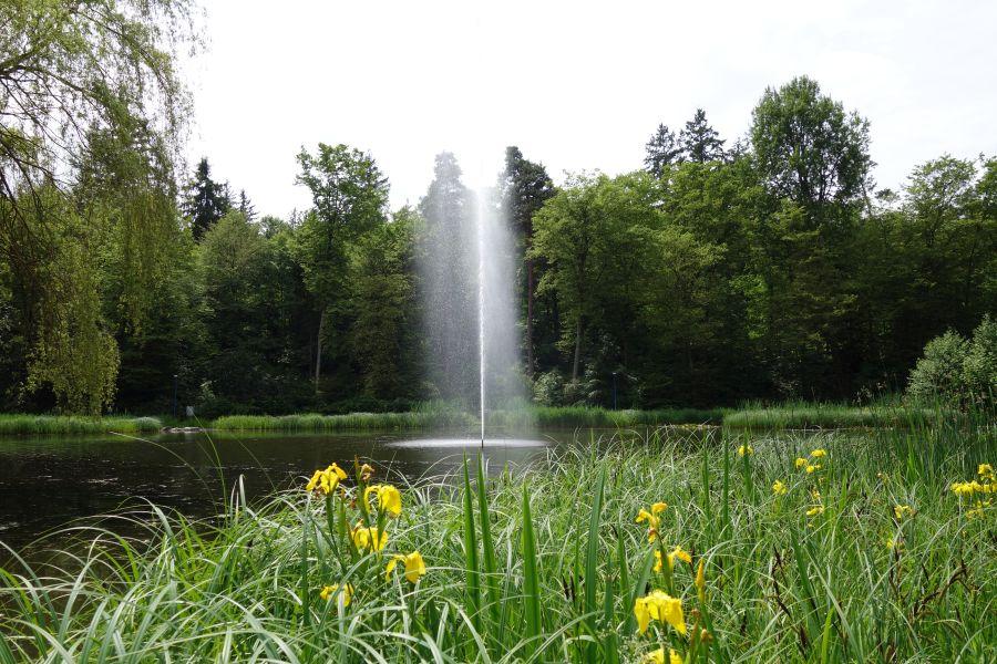 Kurpark See Frühling