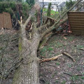 Wenn der Boden zu nass ist, können bereits schwächere Sturmböen die Bäume zum Entwurzeln bringen.