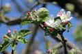 Nahezu in voller Blüte...   Bild: Gemeinde Waldbronn