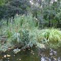Der sanierte Seerosenteich hat eine neu angelegte Ausstiegsstelle für Amphibien.  Bild: Gemeinde Waldbronn