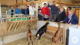 Besuch einer Ziegenfarm