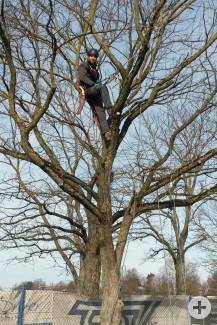 Ein Mitarbeiter der Gemeindegärtnerei bei Baumpflegearbeiten.
