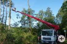 Im Zuge der Trockenheit mussten viele Altholzbuchen eingeschlagen werden.