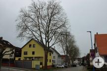 Die Krähen und deren Nester in der Stuttgarter Straße stehen unter Naturschutz.
