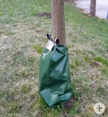 Die Wassersäcke dienen der Bewässerung der jungen oder gefährtdeten Bäume. Bilder: Gemeinde Waldbronn