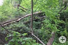 Im Naturdenkmal Käppliswiesen sind verschiedene Ausgleichsmaßnahmen geplant.