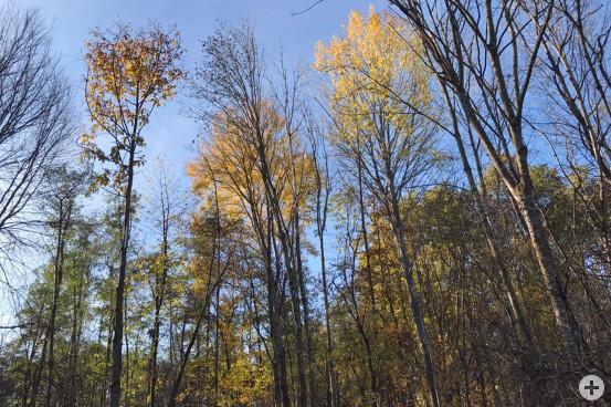 Die ehemalige Freifläche im Waldinneren wurde behutsam wieder ausgelichtet.