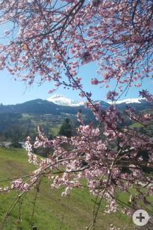 2021- Frühlingsblüten in Saint-Gervais